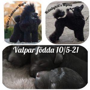 Valpar födda 10/5-21